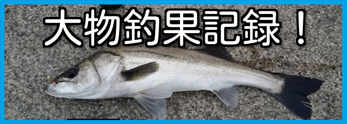 釣り大物釣果シーバスクロダイ